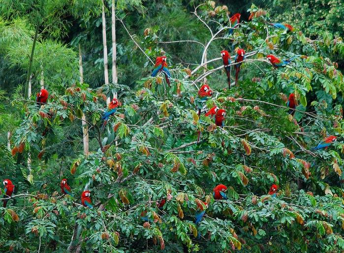 Леса Амазонии24 (700x514, 635Kb)