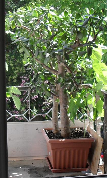 Плоды на денежном дереве (423x700, 224Kb)