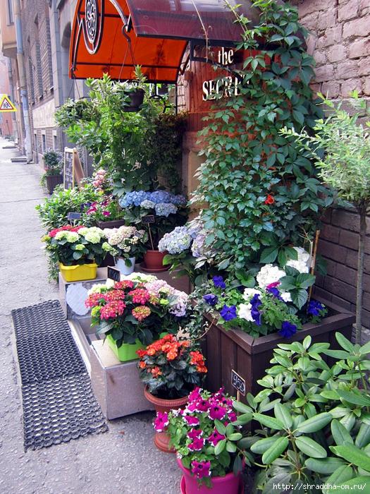 цветы на улицах Питера (3) (525x700, 466Kb)