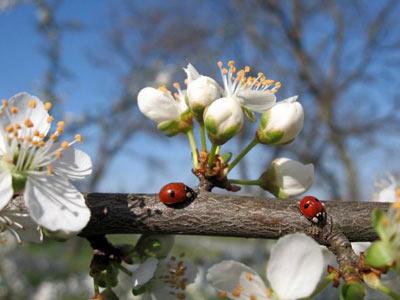 spring (400x300, 26Kb)