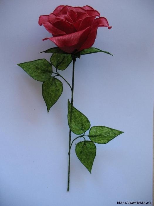 Очень красивые розы из гофрированной бумаги (31) (525x700, 198Kb)