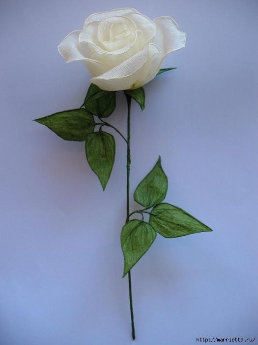 Очень красивые розы из гофрированной бумаги (32) (525x700, 178Kb)