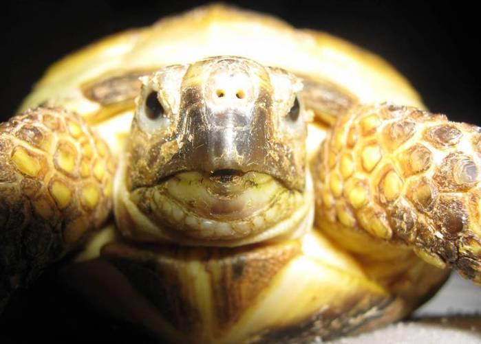 черепаха (700x501, 40Kb)