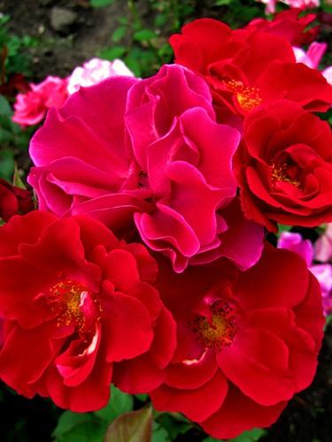 0_6b886_33eab363_L цветы (375x500, 49Kb)