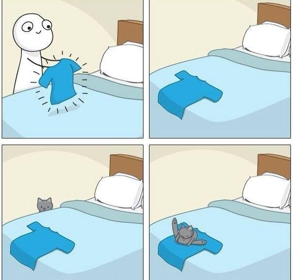 Всем знакомо у кого есть кошка