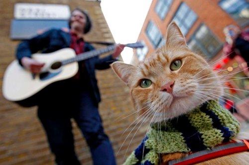 1352387700_street-cat-named-bob-9 (500x333, 34Kb)