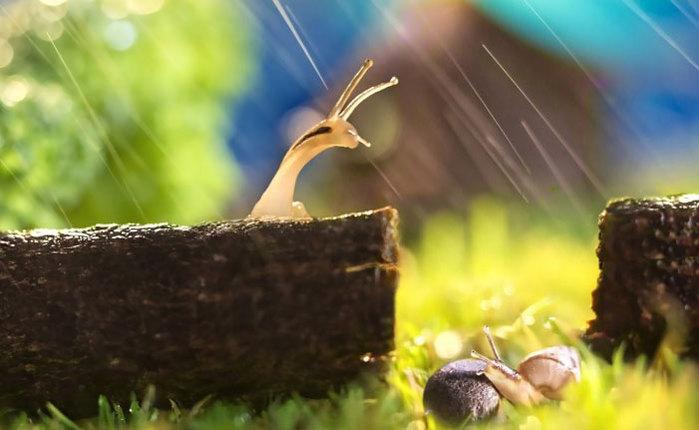 улитки под дождем/4348076_3dojd (700x430, 56Kb)