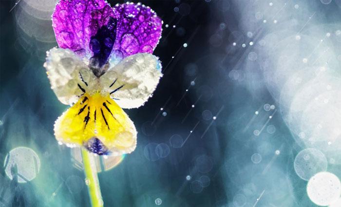 цветок под дождиком/4348076_4dojd (700x425, 57Kb)