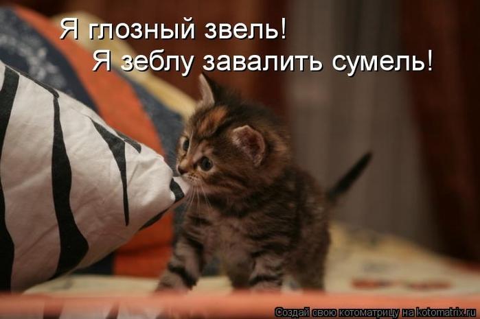 kotomatritsa_MY (700x465, 166Kb)