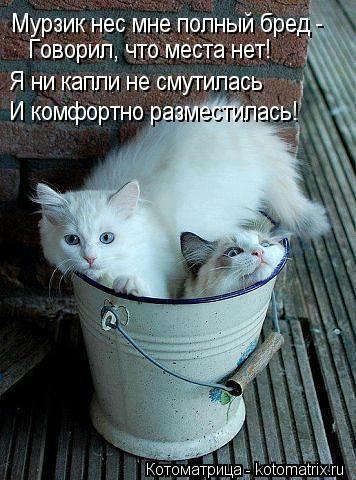 kotomatritsa_QQl (356x480, 115Kb)