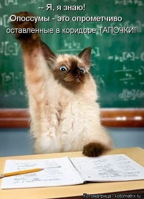 kotomatritsa_Wu (500x690, 125Kb)