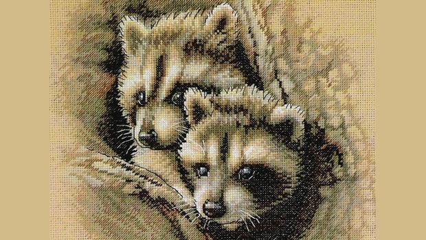 Два малыша енота украсят любую