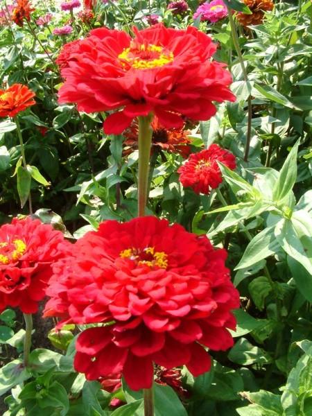 Рассада цветов: правила выращивания 80