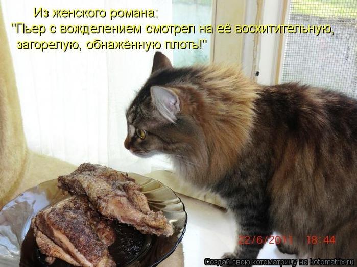 X. Забавные фотографиишрифт. фотографии с кошками. фон. 15