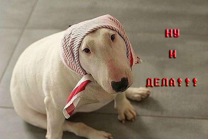 99961572_4212272_zabavnye_sobaki_110_foto_39 (700x468, 68Kb)