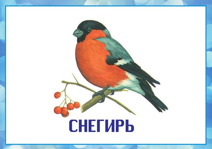 Голоса зимующих птиц скачать бесплатно mp3