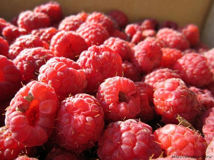 ягодки (2) (700x525, 305Kb)