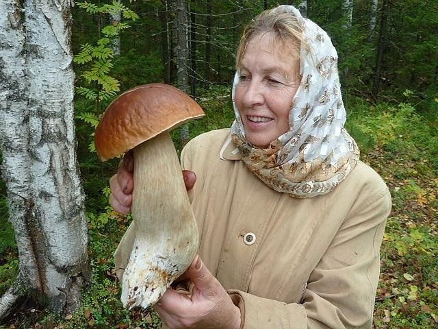 К чему снится сбор грибов беременной 28