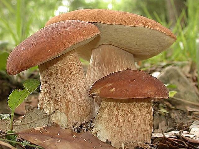 Когда будут грибы в 2018 в красноярске