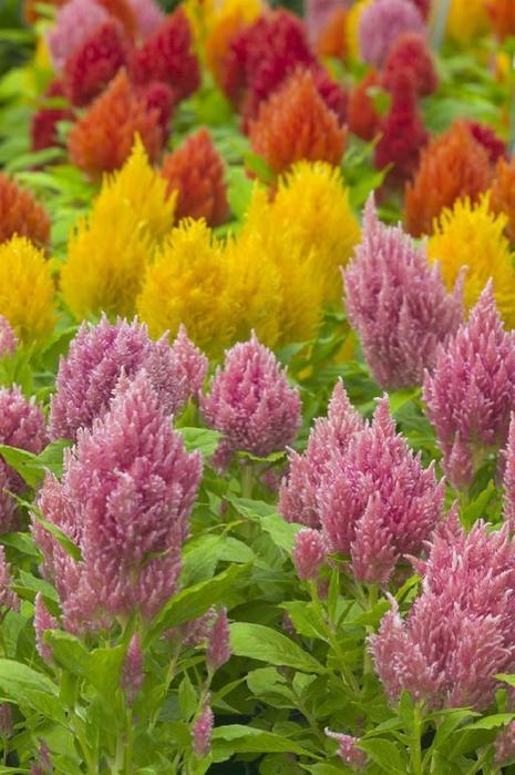 Справочник цветов в картинках 2