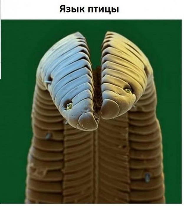 mikroskop-0005 (624x700, 179Kb)