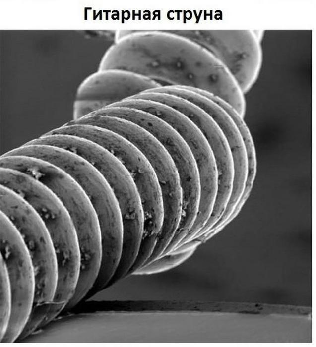 mikroskop-0008 (637x700, 182Kb)