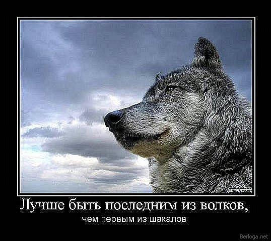 berloga.net_761097514 (538x480, 112Kb)