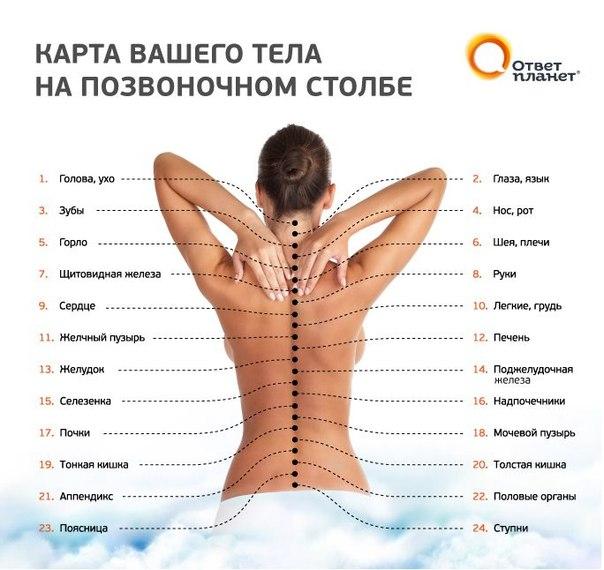1371492204_Karta_tela_na_pozvonochnom_stolbe (604x570, 65Kb)