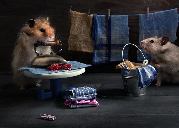 hamsters05 (700x501, 210Kb)