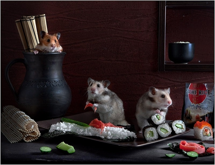 hamsters07 (700x538, 270Kb)