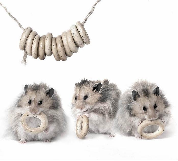 hamsters13 (700x632, 156Kb)
