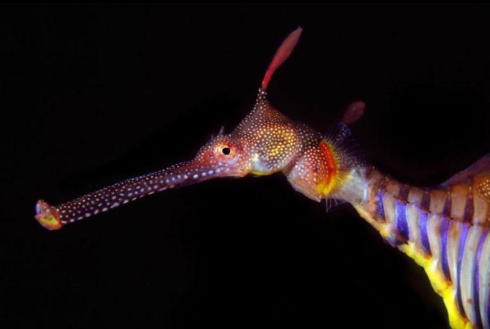 fish121 (700x470, 100Kb)