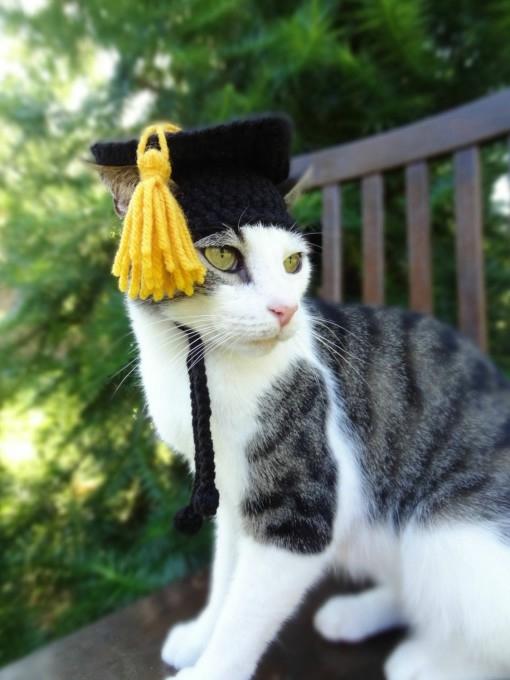 одежда для кошек фото 1 (510x680, 132Kb)