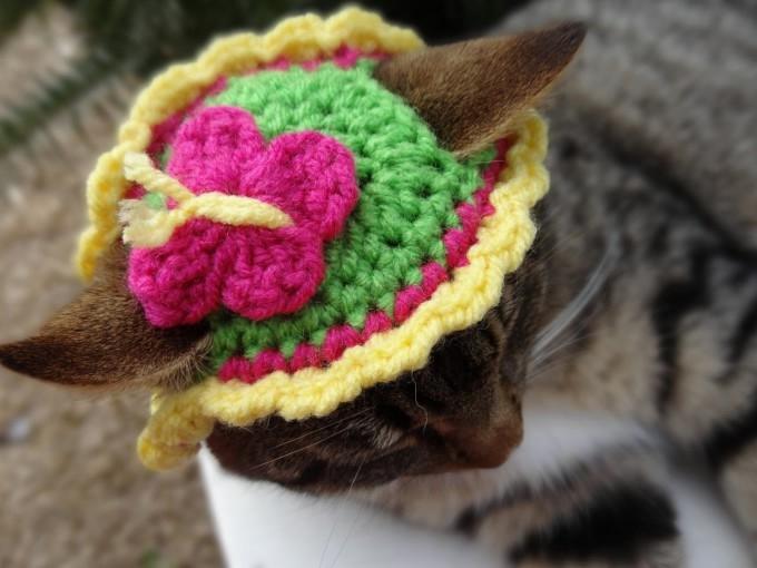 одежда для кошек фото 5 (680x510, 137Kb)
