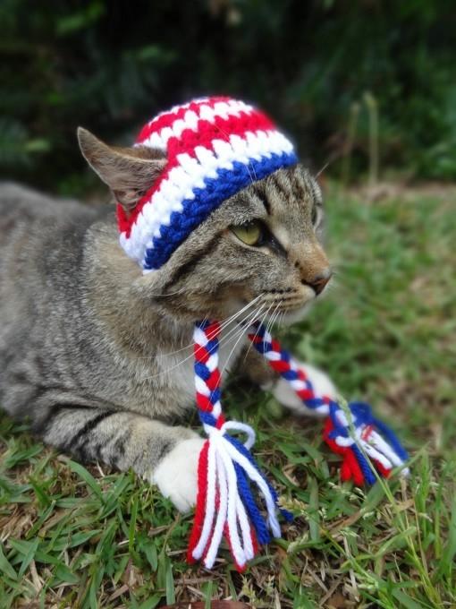 одежда для кошек фото 8 (510x680, 188Kb)