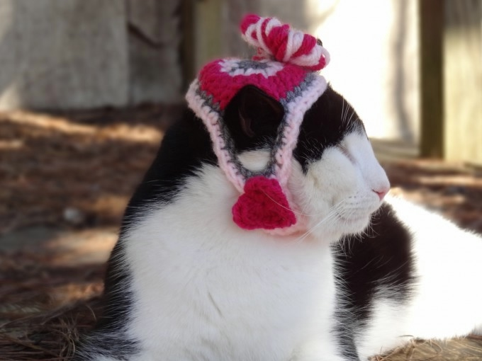 одежда для кошек фото 10 (680x510, 102Kb)