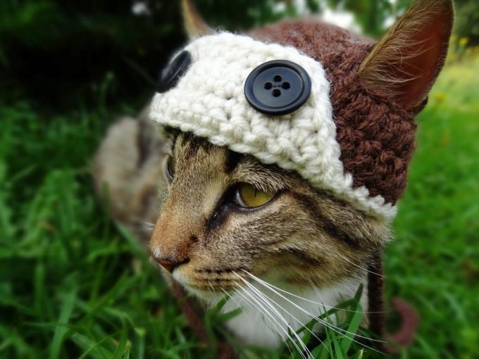 одежда для кошек фото 12 (680x510, 159Kb)