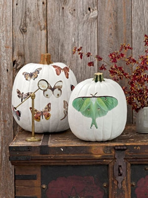 halloween-pumpkins-moth-decals-1012-NKcT0l-mdn (300x400, 92Kb)