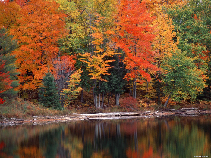michigan_hiawatha_national_forest_1600 (700x525, 587Kb)