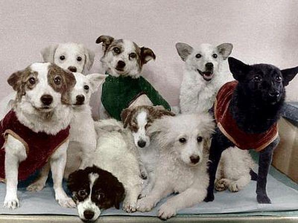 400pxSoviet_Space_Dogs (600x450, 181Kb)
