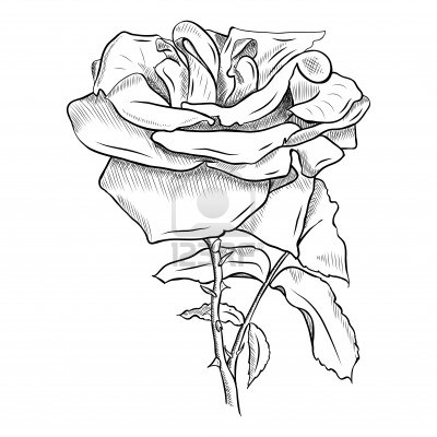 - Model de fleur a dessiner ...
