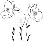������ 13490561-poppies-flower--freehand-on-a-white-background-vector-illustration (400x400, 49Kb)