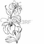 Превью 18766042-lily-flower (450x450, 105Kb)