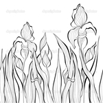 Превью depositphotos_11453172-Decorative-seamless-border-with-Iris-flowers (700x700, 271Kb)