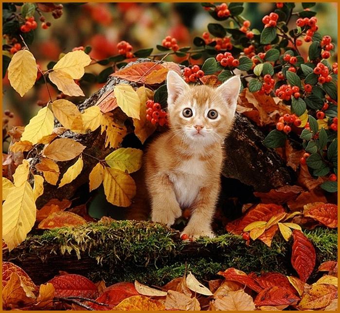 http://img1.liveinternet.ru/images/attach/c/8/104/714/104714345_4.jpg