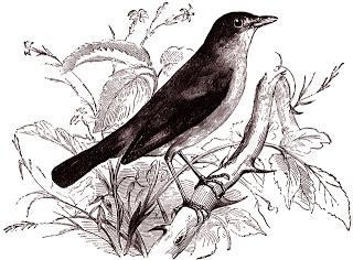 free digital stamp - bird image (320x236, 76Kb)
