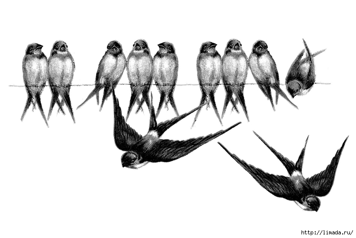Vintage-Bird-Image-Swallows-Line-GraphicsFairy2 (700x469, 115Kb)