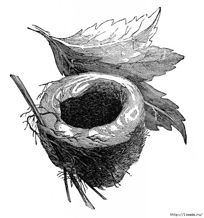Vintage-Images-Empty-Nest-GraphicsFairy-955x1024 (652x700, 258Kb)