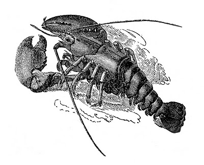 reqlobster-graphicsfairy011b (400x323, 81Kb)