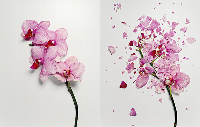 6db8broken_flowers_1 (640x407, 169Kb)